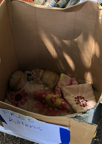 kittens in a cardboard box at a yard sale with a sign that says free kittens