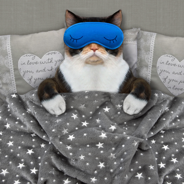 Cat sleeping with mask on